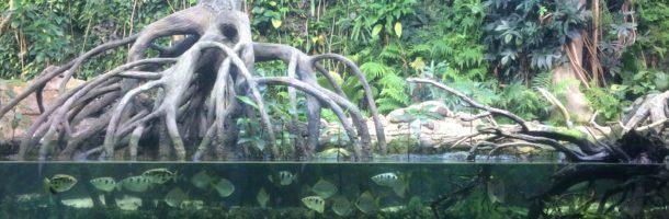 Ausflug in die Tropen und den Regenwald – Zoo Zürich